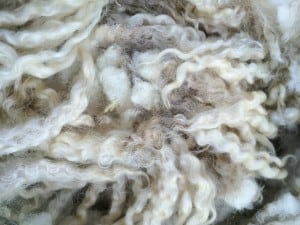 Gottland Cross fleece