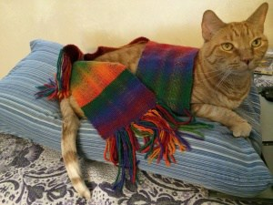 Tiger modeling the Double Rainbow Scarf